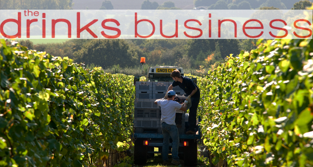 The Drinks Business Pinot Noir Master: 3 Bronze Medals